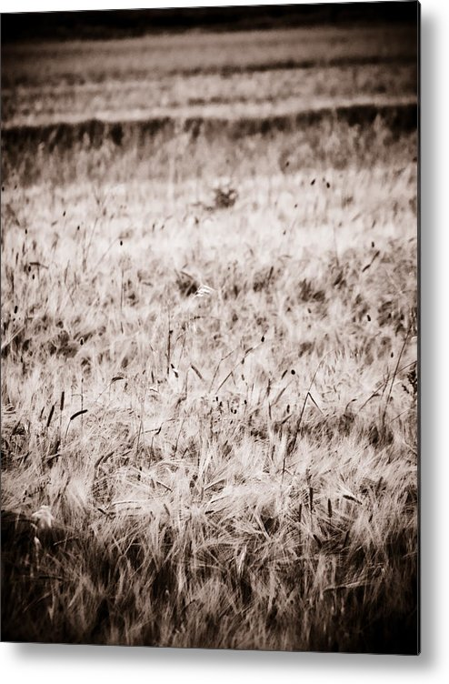 Country Side Metal Print featuring the photograph Campo by Felix M Cobos