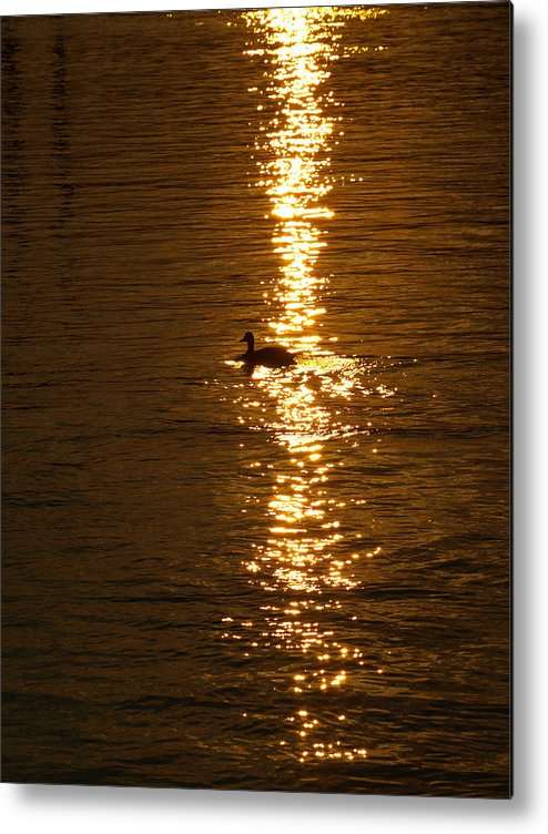 Duck Metal Print featuring the photograph Chincoteague Bay Sunset by Kim