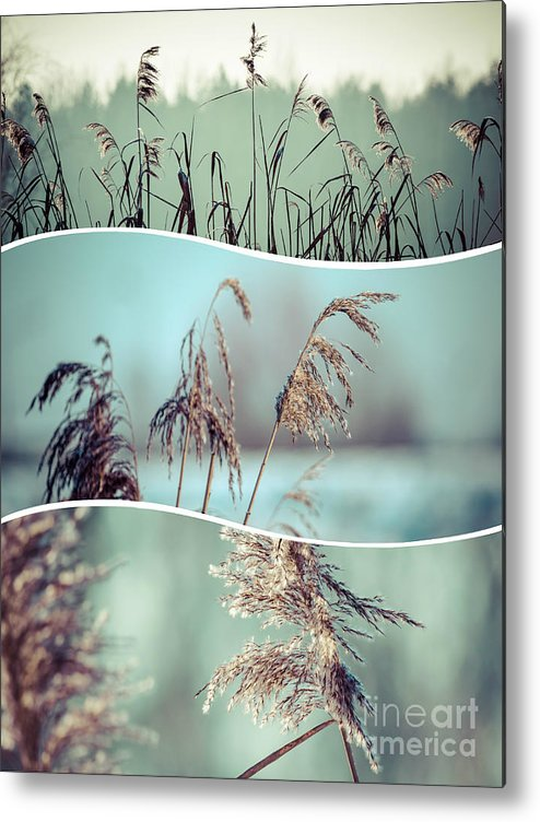 Grass Metal Print featuring the photograph Collage Of Winter Grass by Mariusz Prusaczyk