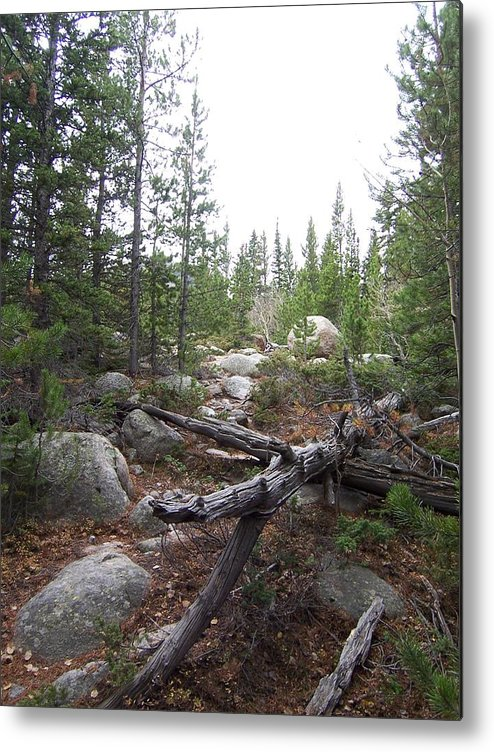 Landsscape Metal Print featuring the photograph Colorado Trees by Lisa Gabrius