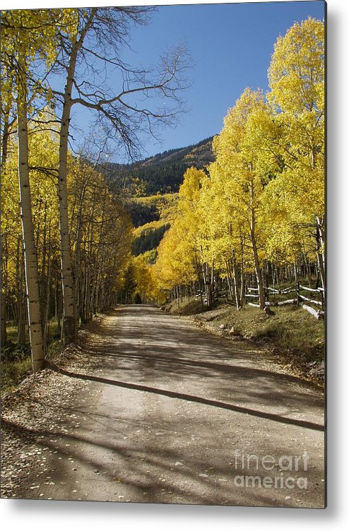 Colorado Fall Color Metal Print featuring the photograph Conejos In Fall by Bill Hyde