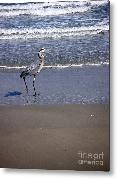 Nature Metal Print featuring the photograph Creatures Of The Gulf - Walk This Way by Lucyna A M Green