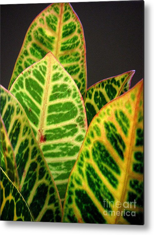 Nature Metal Print featuring the photograph Croton Leaves In Profile by Lucyna A M Green