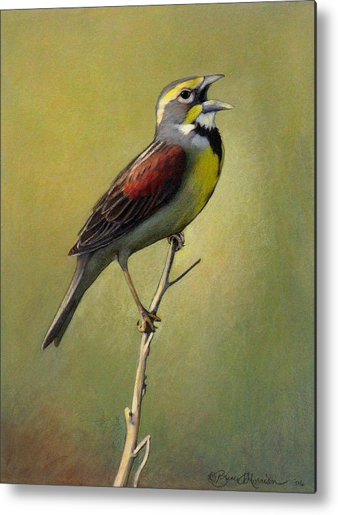 Birds Metal Print featuring the drawing Dickcissel Summer Song by Bruce Morrison