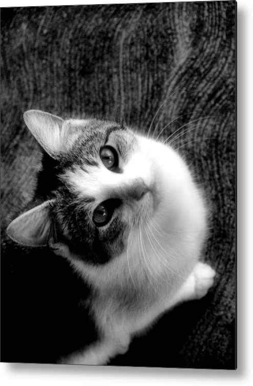 Cat Metal Print featuring the photograph Don't Ever Leave by Gaby Swanson
