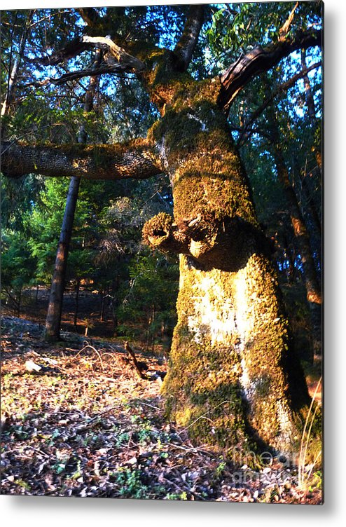 Trees Metal Print featuring the photograph Dragon Tree by JoAnn SkyWatcher