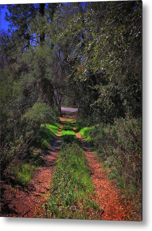 Forest Metal Print featuring the photograph Driveway To Home by Douglas Craig