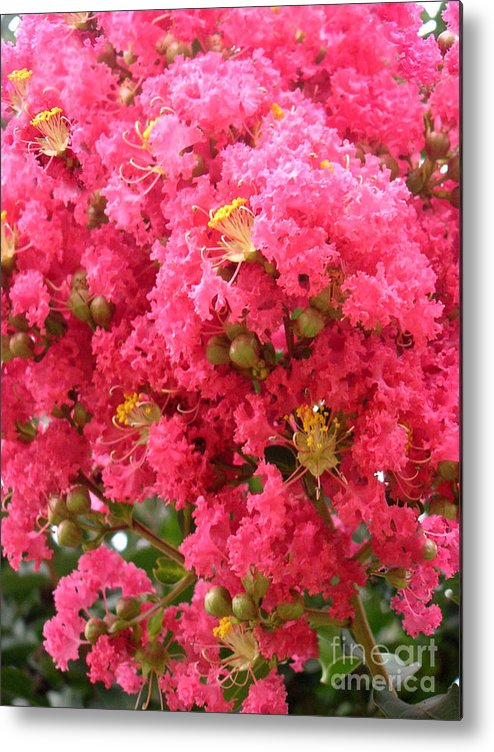 Nature Metal Print featuring the photograph Electrified Pink by Lucyna A M Green