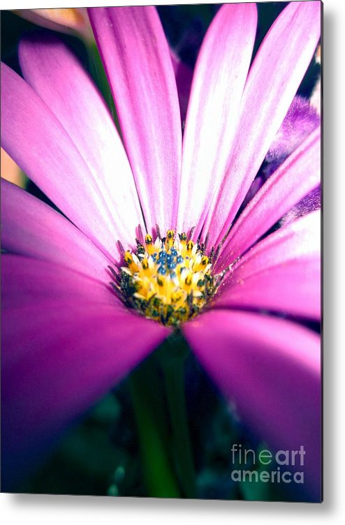 Metal Print featuring the photograph Enhanced Daisy by Miss McLean