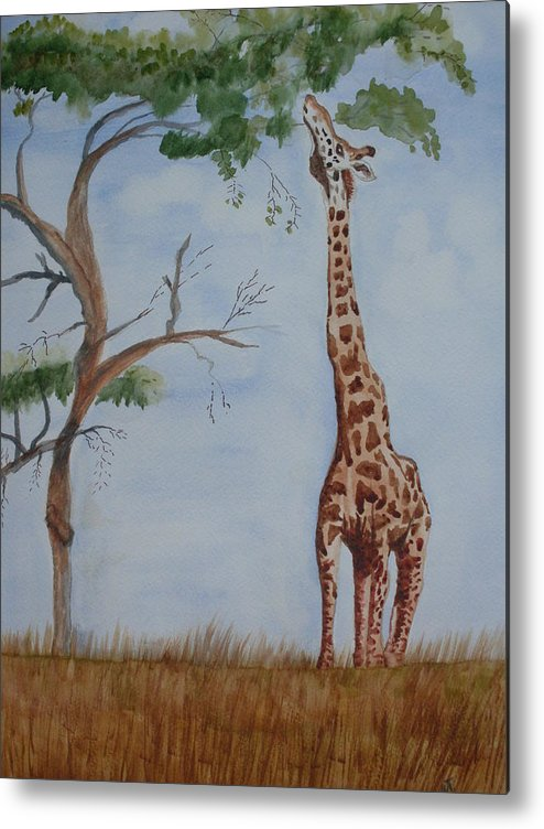 Landscape Giraffe Africa Tree Wildlife Metal Print featuring the painting Evolution's Early Stretch by Warren Thompson