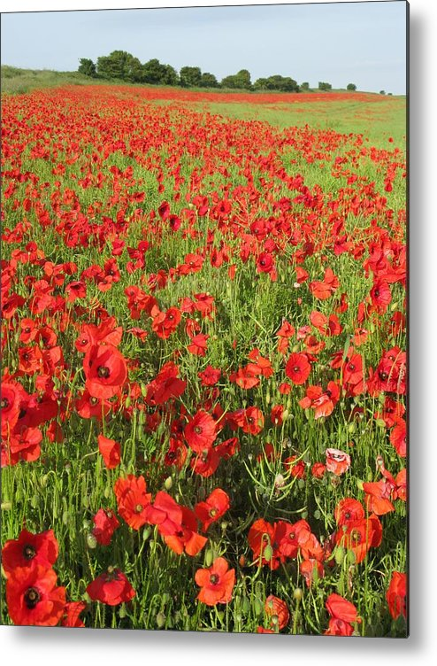 Flanders Field Metal Print featuring the photograph Flanders Field by Maria Joy