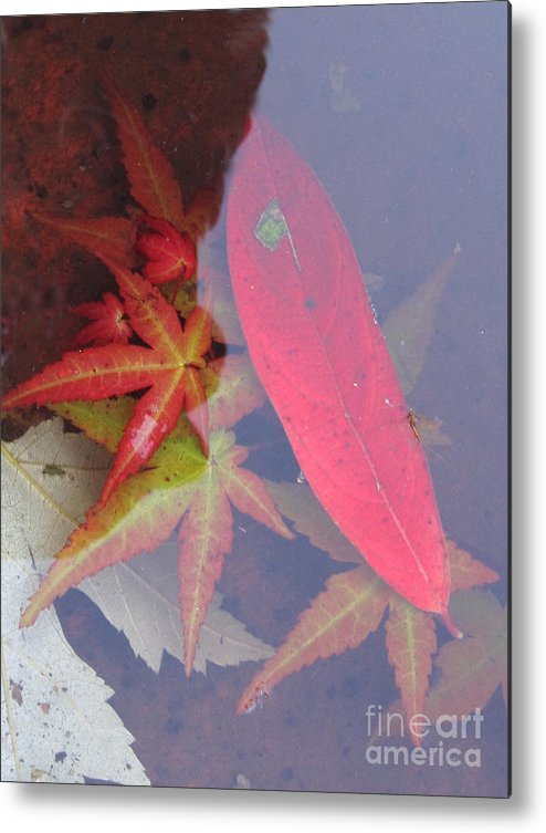 Photography Metal Print featuring the photograph Floating by Addie Hocynec