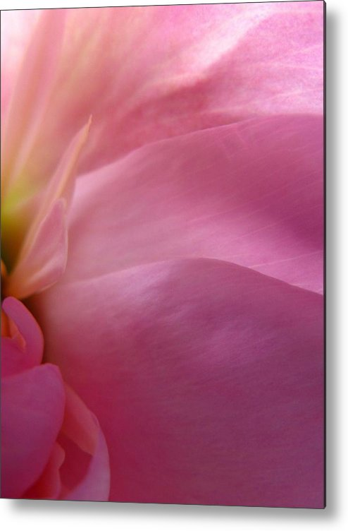 Flower Metal Print featuring the photograph Fragment by Rhonda Barrett