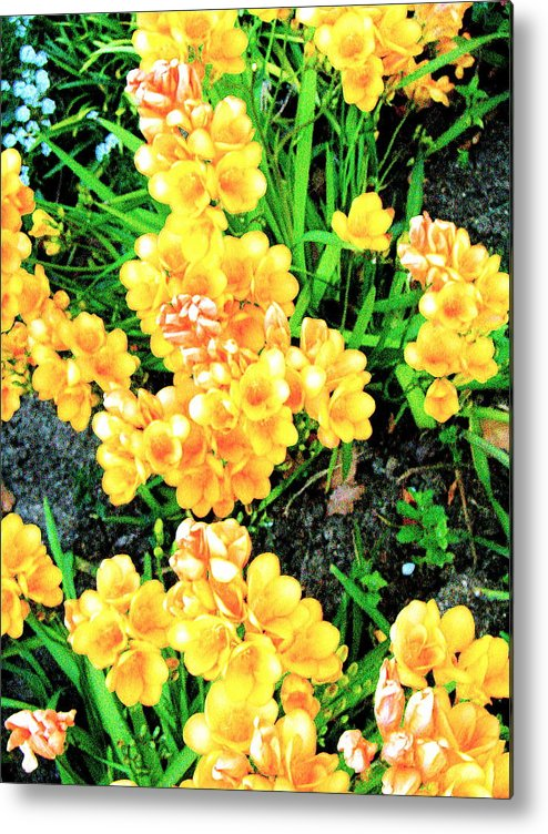 Original Photography Metal Print featuring the photograph Freesias by K Hoover