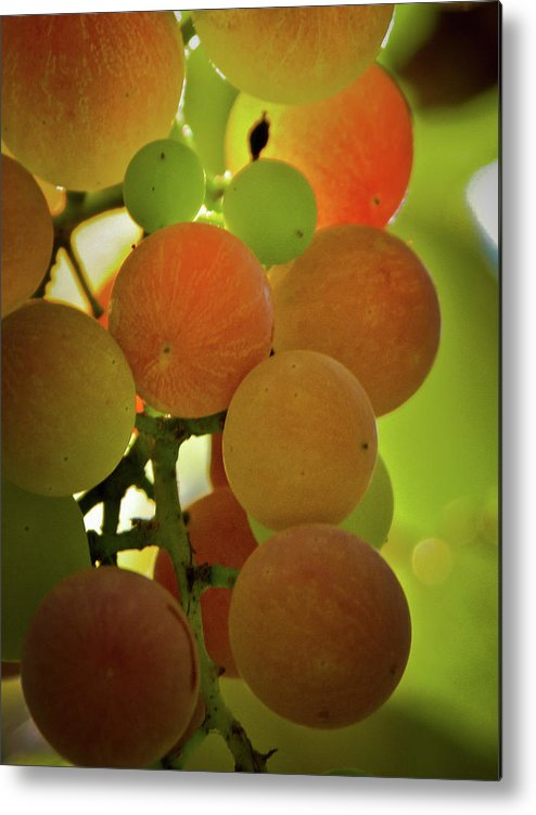Grapes Metal Print featuring the photograph Grapes On The Vine by Joe Teceno