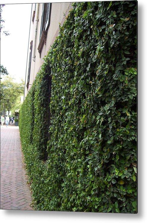 Beautiful Green Wall Metal Print featuring the photograph Green by Nereida Slesarchik Cedeno Wilcoxon
