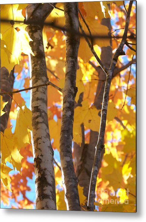 Trees Metal Print featuring the photograph Growing Gold - Photograph by Jackie Mueller-Jones