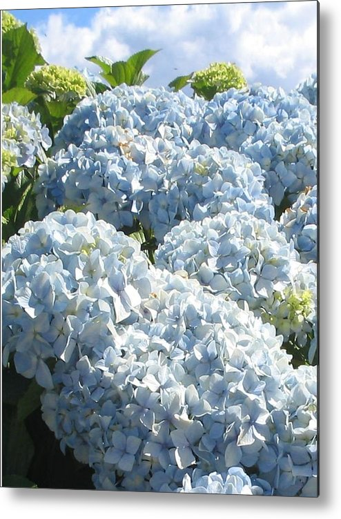 Blue Hydrangea Metal Print featuring the photograph Hydrangeas by Valerie Josi