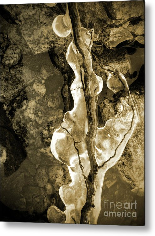 Ice Metal Print featuring the photograph Iced by Tara Turner
