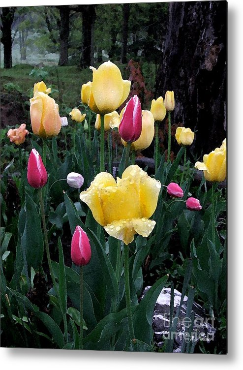 Tulips Metal Print featuring the photograph In The Garden by Judy Waller