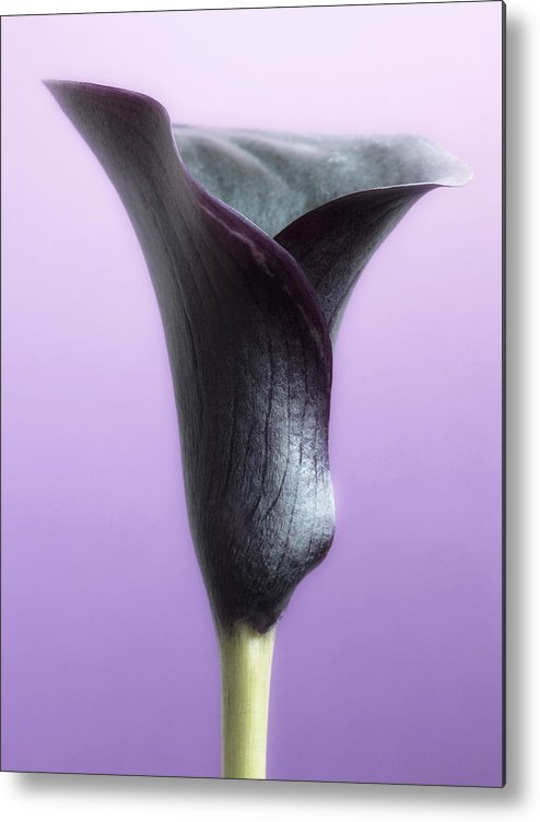 Floral Metal Print featuring the photograph Lilac Purple Calla Flower by Artecco Fine Art Photography
