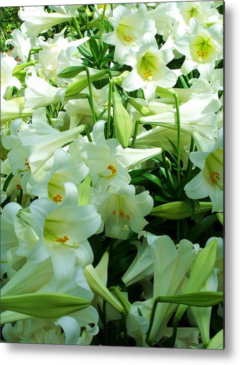 Lily Metal Print featuring the photograph Lilies 11 by Anna Villarreal Garbis