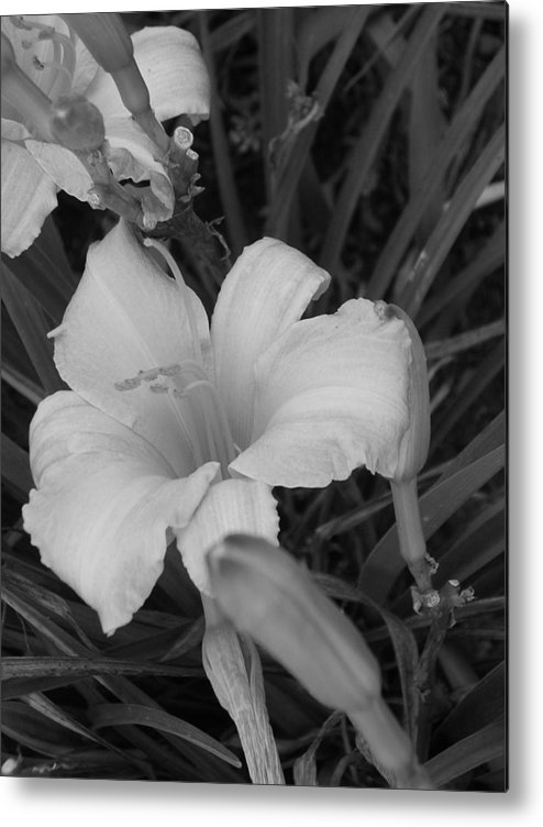 Flower Metal Print featuring the photograph Lily by Audrey Venute