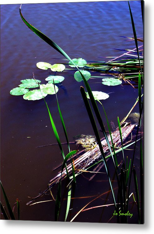 Reeds And Lily Pads Metal Print featuring the photograph Lily Pads And Reeds by Joanne Smoley