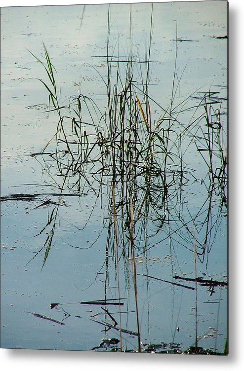 Waterscape Metal Print featuring the photograph Marsh Grass by Donna Thomas