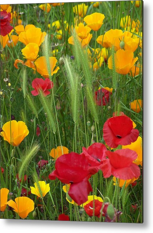 Poppies Metal Print featuring the photograph Mixed Poppies by Gene Ritchhart