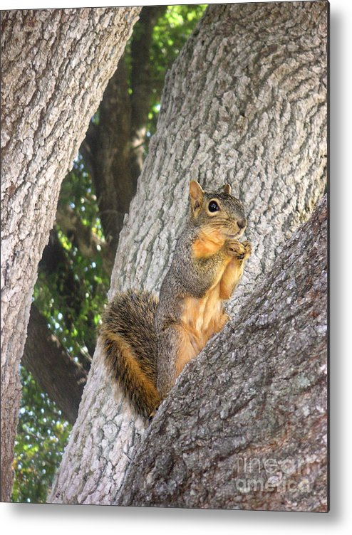 Nature Metal Print featuring the photograph Nature In The Wild - Keeping Watch by Lucyna A M Green