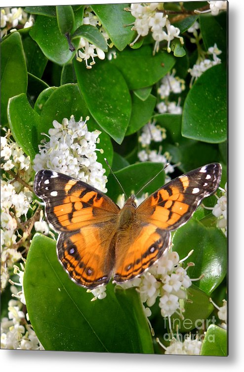 Nature Metal Print featuring the photograph Nature In The Wild - On Golden Wings by Lucyna A M Green