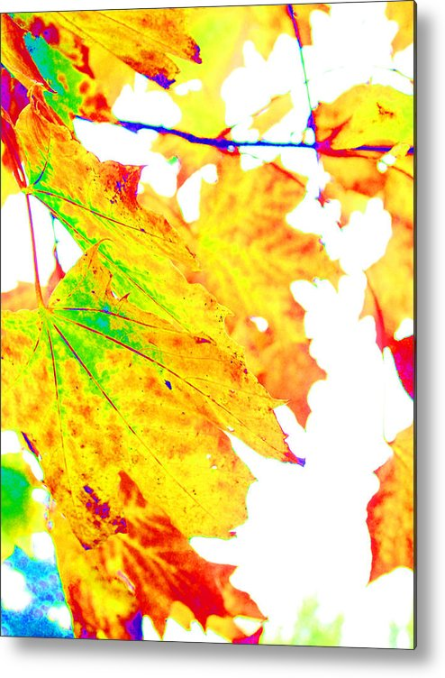 Leaves Metal Print featuring the photograph October Leaves by Nick Gustafson