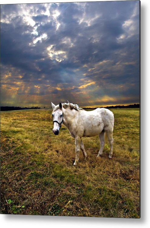 Light Metal Print featuring the photograph One Horse by Phil Koch