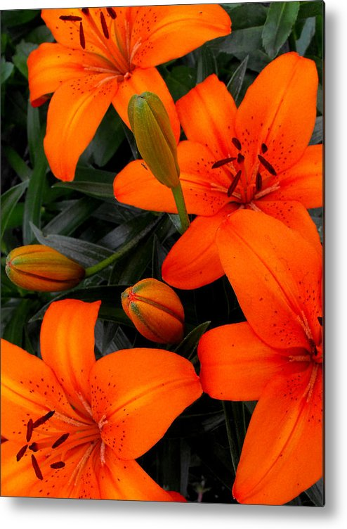 Botanical Metal Print featuring the photograph Open And Closed by Ruth Palmer