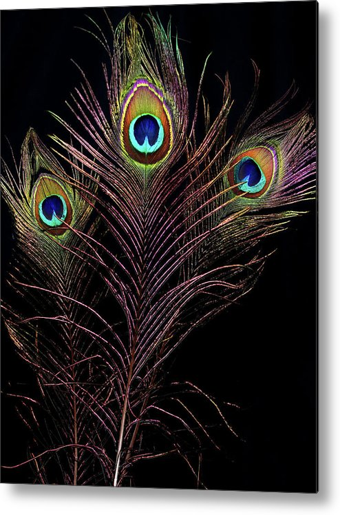 Photograph Metal Print featuring the photograph Peacock 4 by Stormshade Designs