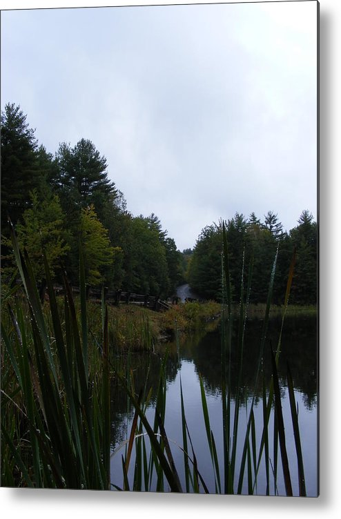 Water Metal Print featuring the photograph Plants At Waters Edge by Alison Heckard