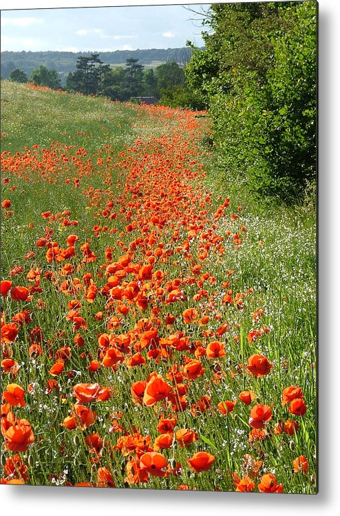 Poppies Metal Print featuring the photograph Poppies Awash by Bob Kemp