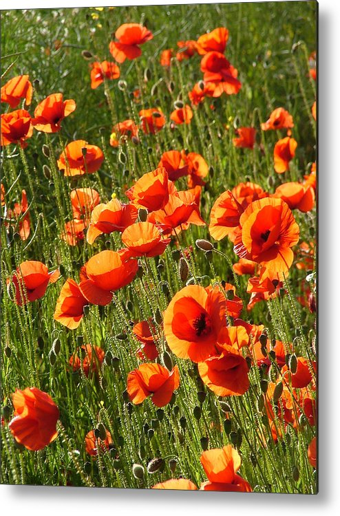 Poppies Metal Print featuring the photograph Poppies by Bob Kemp