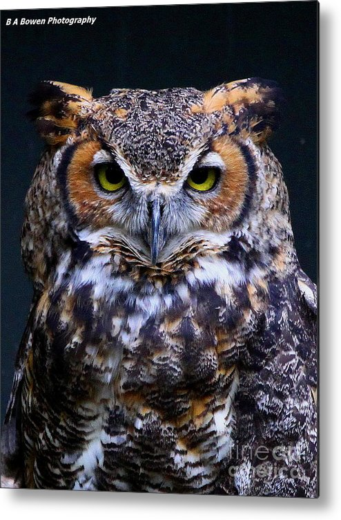 Great Horned Owl Metal Print featuring the photograph Portrait Of A Wise Man by Barbara Bowen
