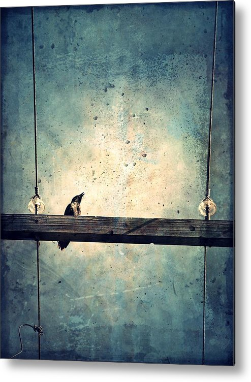 Crow Metal Print featuring the photograph Project Morning by Tara Turner
