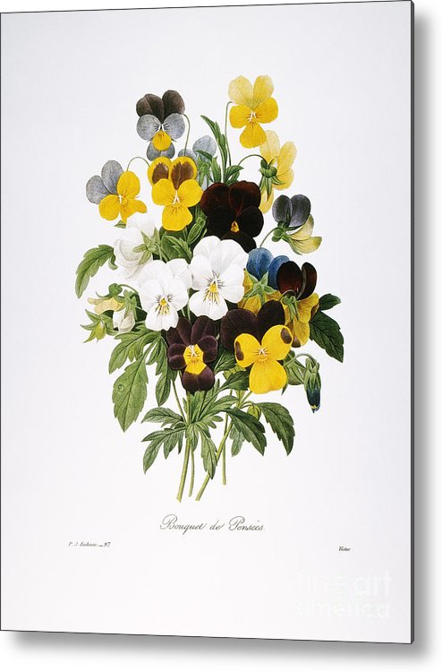 1833 Metal Print featuring the photograph Redoute: Pansy, 1833 by Granger