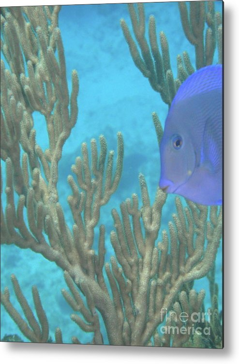 Underwater Metal Print featuring the photograph Reef Tang by Chad Natti
