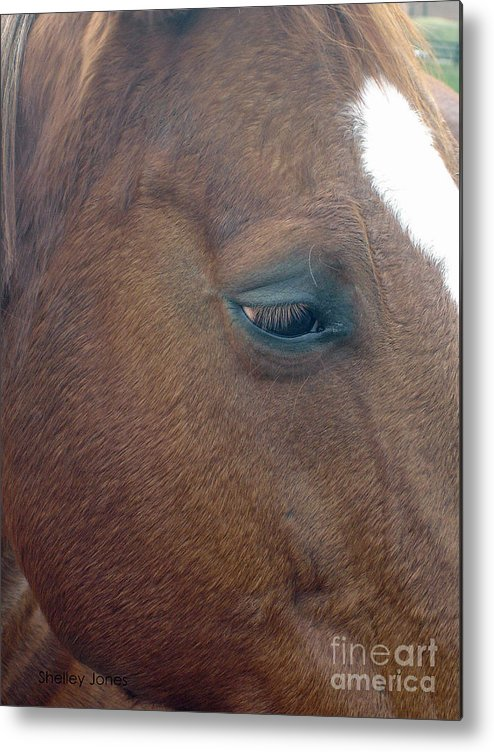 Horse Metal Print featuring the photograph Sad Eyed by Shelley Jones