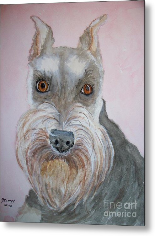 Schnauzer Metal Print featuring the painting Schnauzer by Carol Grimes