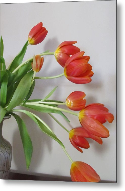 Tulip Metal Print featuring the photograph Signs Of Spring by Judith Turner