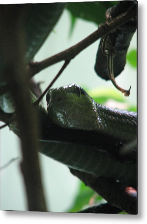 Snake Metal Print featuring the photograph Snake by April Camenisch