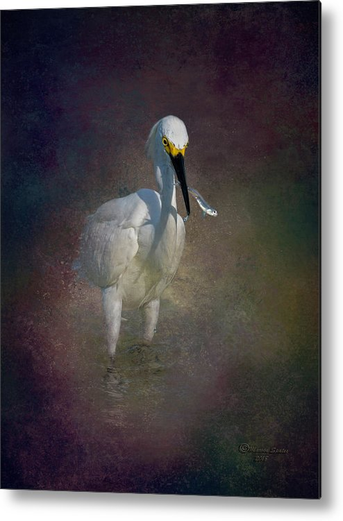 Bird Metal Print featuring the photograph Snowy Lunch by Marvin Spates