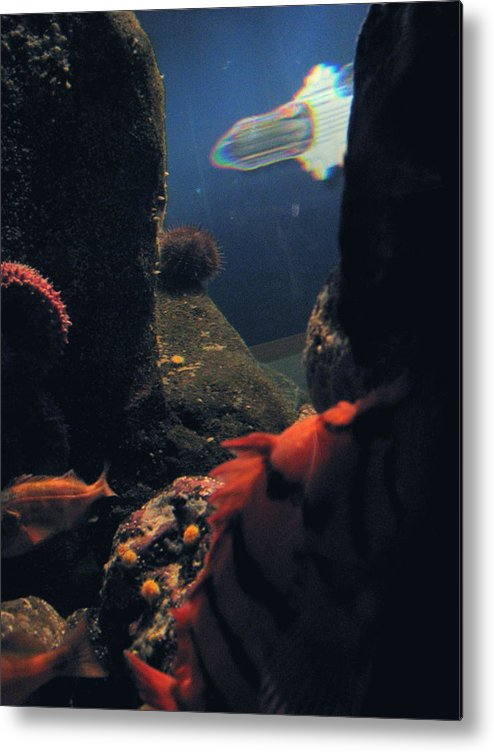 Fish Metal Print featuring the photograph Squid And Fish by Jess Thorsen