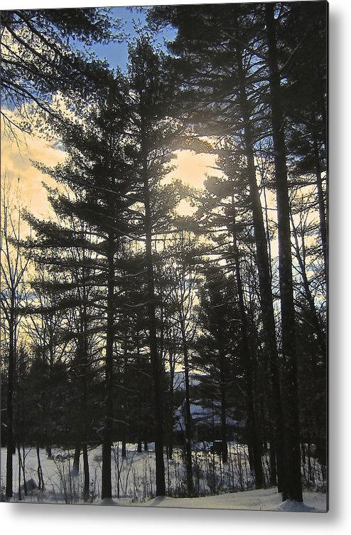 Pines Metal Print featuring the photograph Straining To Win The Sky by Elizabeth Tillar